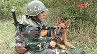 Chó nghiệp vụ Quân đội Việt Nam - Những chiến binh đặc biệt