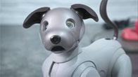 Trên tay chú chó Aibo của Sony